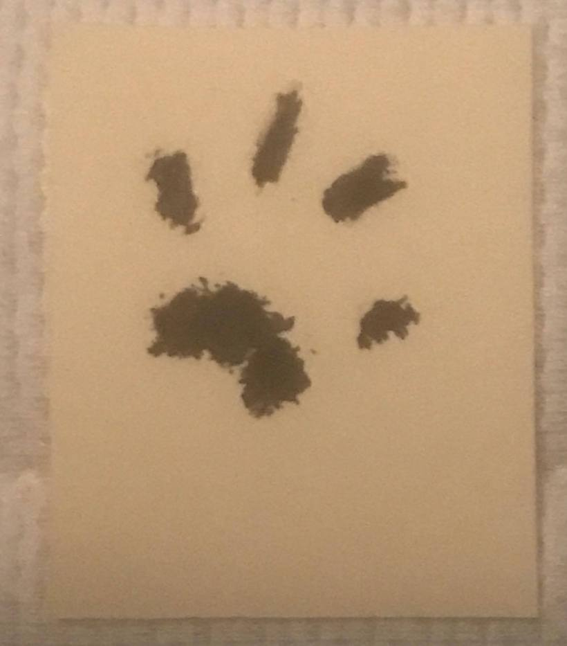 Lawrence's paw print