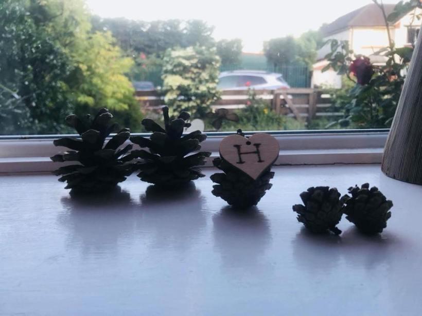 Five pine cones.jpg